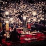 night-time-hanami